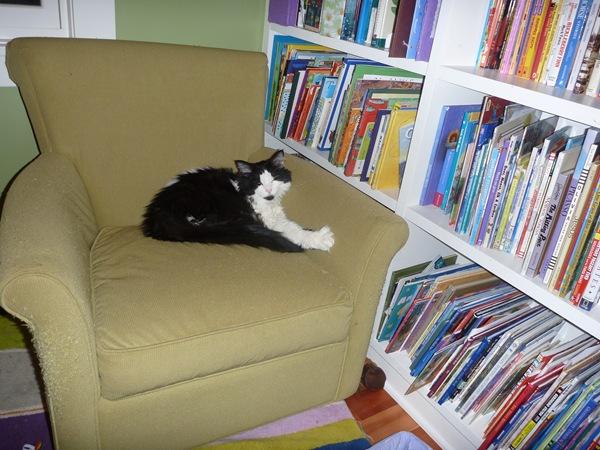 Tera - cat loves books