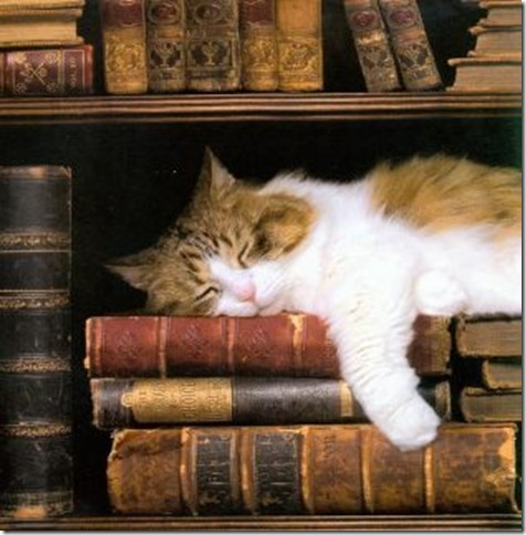 BITW Cat Sleeping on Books