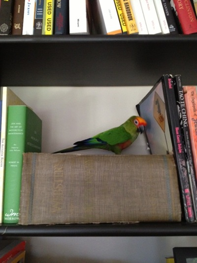 Bookshelf Bird Dictionary