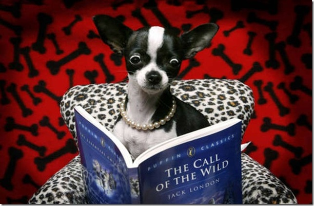 BITW Doggie Reading The Call of the Wild