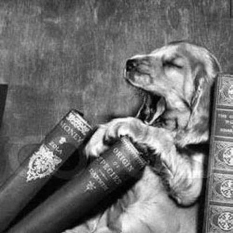 BITW Dog Sleeping Among Books