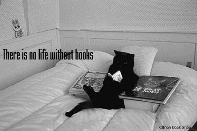 BITW Black Cat Reading in Bed