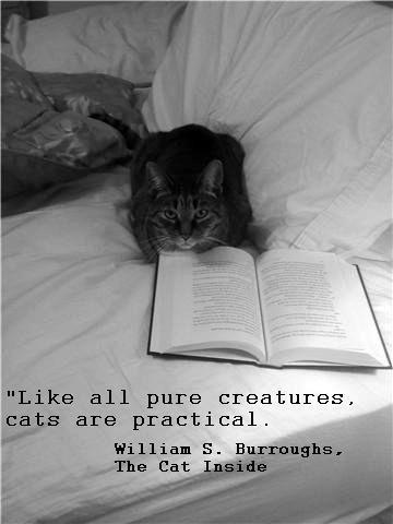 BITW B&W Cat Reading Book with Quote