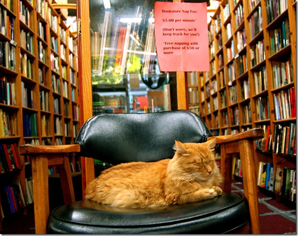 BITW Cat in a chair in a bookstore napping