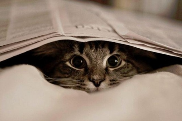 BITW Kitty under newspaper