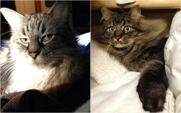 RAoR Cats Luna and Teddy