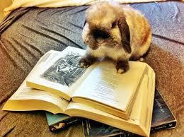 Rabbits read too, who knew?